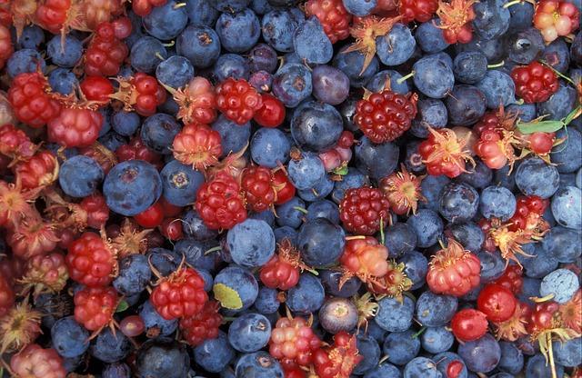 ANWR Alaska Berries